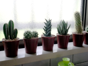 The little cactus family above my sink.